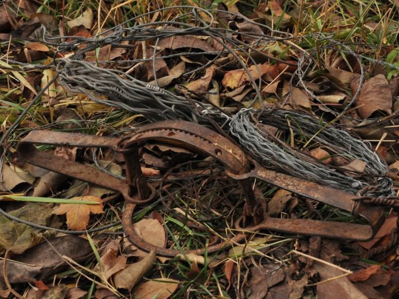 В Запорожье щенок попал в капкан браконьеров и лишился лапы (ФОТО)