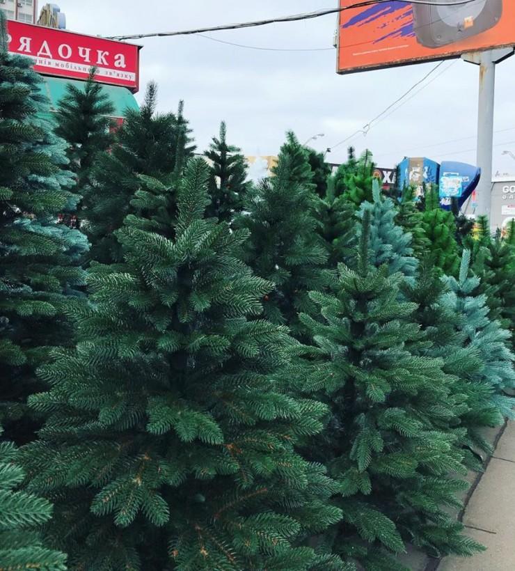 Праздник приближается: елки в Киеве продают по 400 гривен за метр (ФОТО)